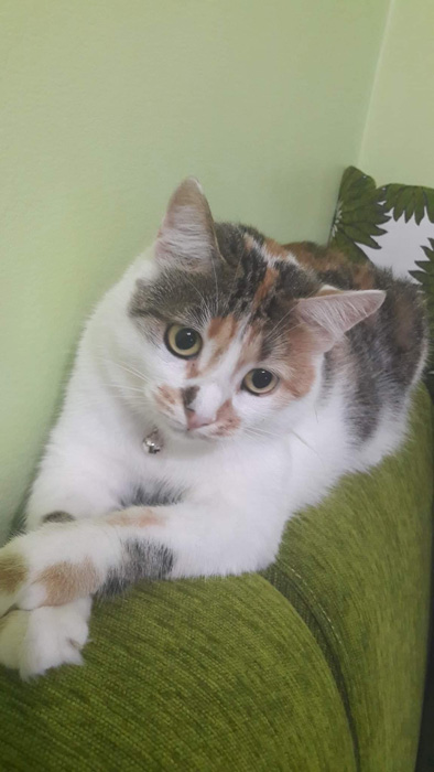 pisica-slider-v1