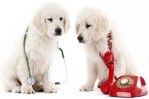 Urgențe veterinare – care sunt cele mai frecvente cazuri?