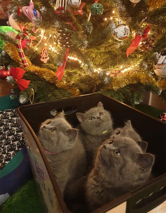 cutie pisici