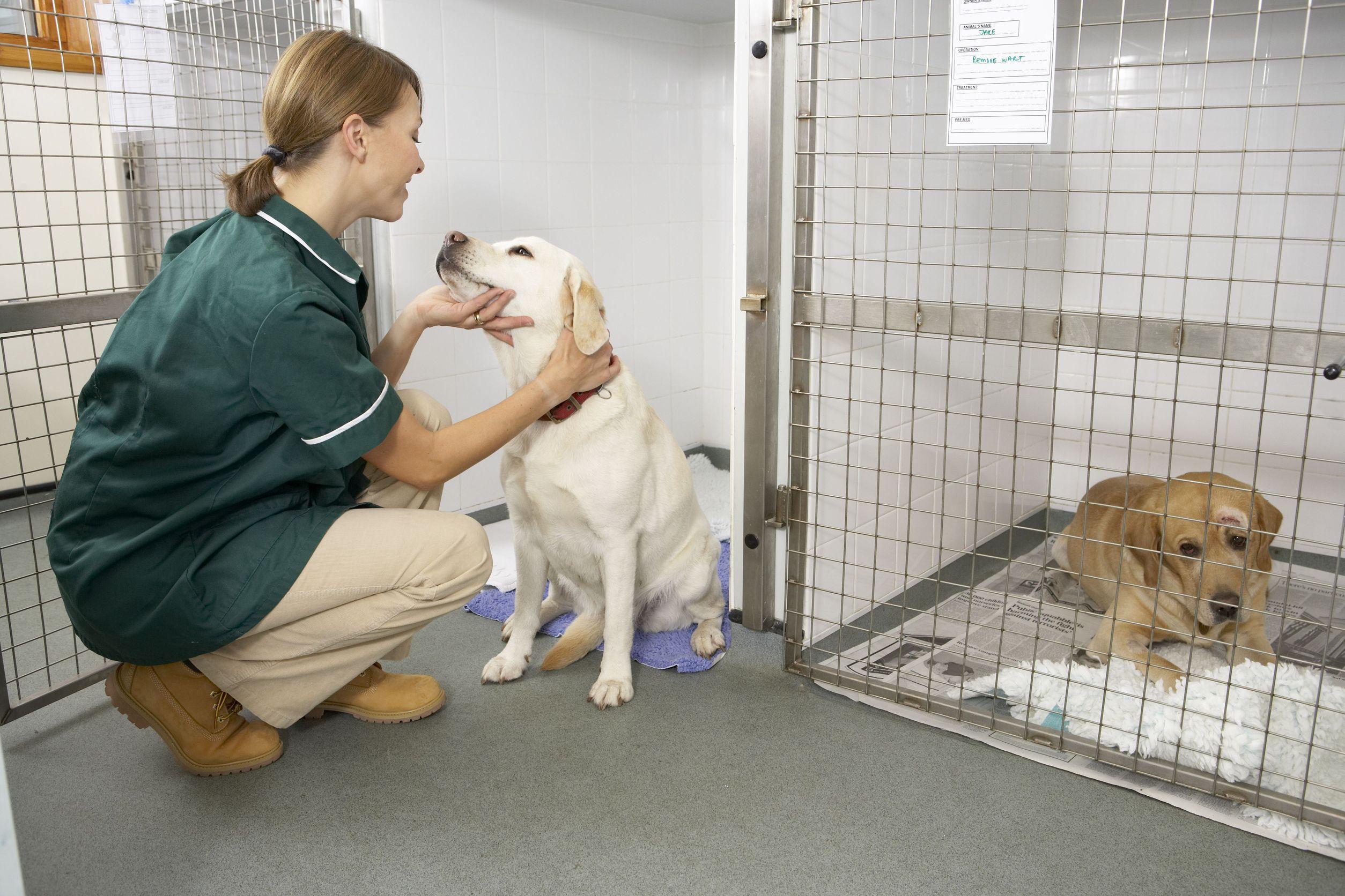 Parvoviroza la câini adulți și pui, cauze și tratament